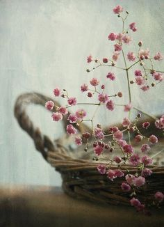 Country Pink - pink baby's breath~gypsophilia - in basket