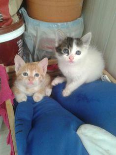 Teddy e Frajola