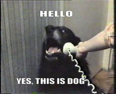 Hello, yes this is Dog. So so so funny