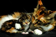 """Mother and daughter """"Opera""""    Flickr - Photo Sharing!"""
