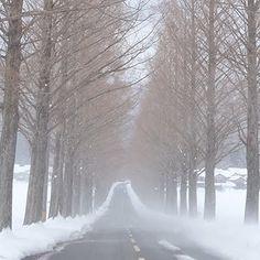 メタセコイア並木を妨げる吹雪 #メタセコイア並木 #雪 #吹雪 #landscape #けしからん風景 #誰かに見せたい景色 #followme #sonyalpha #α7 #japan_of_insta #bestjapanpics #special_post #japanigram #lovers_amazing_group #photo_travelers #art_of_japan #photo_shorttrip #写真好きな人と繋がりたい #写真撮ってる人と繋がりたい #カメラ好きな人と繋がりたい #写真好き #広がり同盟 #ファインダー越しの私の世界  #ファインダー越しの雪の世界 #写真部 #写真好きな人と繋がりたい #写真撮ってる人と繋がりたい #写真好き #lovers_nippon #bestjapanpics #special_post #Loves_nippon #japan_photo_now #art_of_japan #lovers_amazing_group #photo_jpn #pics_jp #jp_gallery…