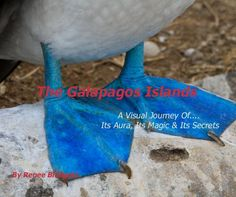 The Galapagos Islands by Renee Blodgett