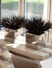 Grasses in Black Shiny Cubes
