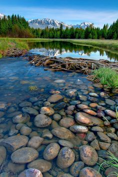 A Snake River tributary, Wyoming. #Country #River #Landscape
