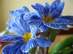 Las 15 flores más exóticas del mundo - Notas - La Bioguía