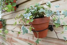 Eco Plant Holder. A simple, cost effective way of transforming your shed, fence or wall.