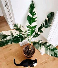 Big Leaf Plants, Foliage Plants, Cool Plants, Plant Leaves, Best Indoor Trees, Big Indoor Plants, Big Leaf Indoor Plant, House Plants Decor, Plant Decor