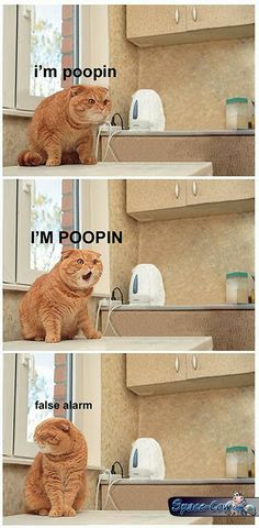 funny animals cats humor