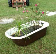 1920u0027s cast iron porcelain bath tub used as a garden planter with Rose bush  and Pony