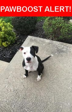 Is this your lost pet? Found in Fairfield, OH 45014. Please spread the word so we can find the owner!  Very sweet dog found near border of Springfield Township and Fairfield. A very kind police officer has taken her to his home until owner is found. No chip, no tags.   Nearest Address: Near Hamilton Ave & Pleasant Ave