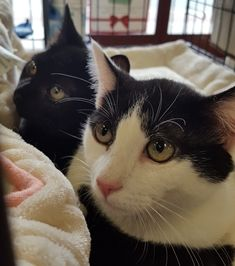 Looking For A New Best Friend There Are Many Pets In Foster Care And Local Shelters Deserving Of Forever Homes Below Are Pet Adoption Animal Hospital Pets