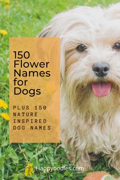 If you are looking for a nature-inspired name for your dog, flower names offer many possibilities. Some might be common but if you are looking for an unusual dog name, flower names will not disappoint. Of course flower names for dogs are only the beginning.  There many great dog naming possibilities that are related to nature. Rather than you trying to come up with all the options, we have created a list for you. In total we have over 300 nature related dog name to choose from. (#dognames) Unusual Dog Names, Best Dog Names, Puppy Names, Lovers Pics, Dog Lovers, Nature Names, Me And My Dog, Group Of Dogs, Crazy Dog Lady