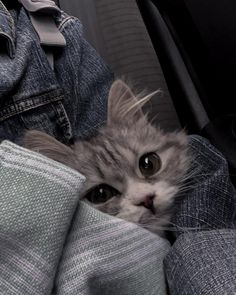 Cute Kittens, Cats And Kittens, I Love Cats, Cool Cats, Cute Baby Animals, Funny Animals, Cute Cat Wallpaper, Wallpaper For Your Phone, Gatos Cool