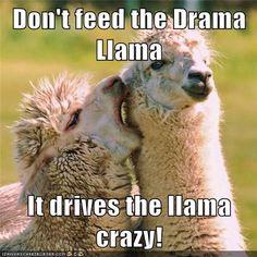 Don't feed the Drama Llama  It drives the llama crazy!