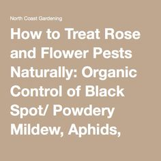 How to Treat Rose and Flower Pests Naturally: Organic Control of Black Spot/ Powdery Mildew, Aphids, and Caterpillars ⋆ North Coast Gardening