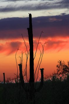 sanoran desert sunset ii | Flickr - Photo Sharing!