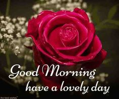 Looking for best Good Morning Wishes and Images with Rose? Check out our collection of beautiful HD Images, Pictures and Pics to send to your loved ones and spread a smile on their faces. Good Morning Beautiful Flowers, Beautiful Morning Pictures, Good Morning Roses, Good Morning Msg, Good Morning My Friend, Good Morning Photos, Good Morning Greetings, Morning Wish, Latest Good Morning Images