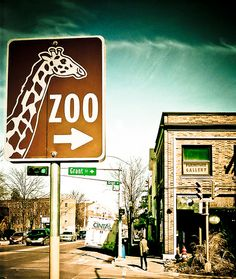 Buy a disposable camera and take up all the film at a zoo