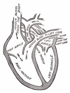 Easily Remember the Most Common Cause of Right-Sided Heart