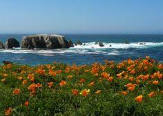Point Buchon poppy meadows - one of the best seaside California poppy meadows