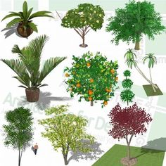 A collection of tropical trees, citruses and various trees and shrubs as SketchUp 3D models. Free download! Sketchup Model, Playground Design, Landscape Architecture Design, Parking Design, Landscaping Plants, Trees And Shrubs, Planting Flowers, 2d, Tropical