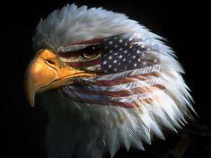 Posterleisten PL1028 Adler USA Flagge Wandbild inkl