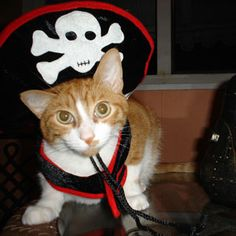 We'd walk the plank any day if this petite kitty told us to. How delightful is that pirate hat?