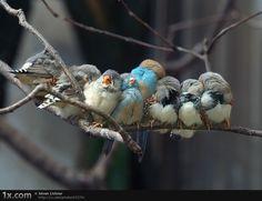 Sleepy birds