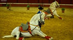 Animals in Figueira da Foz, Portugal (moment carmelo cuevas show august figuiera also: girls horses spanish) - a photo by Teresa Soares
