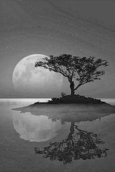Aprovechen la Energía de la Luna Llena del 15•16 de Enero para Anclar el Éxito.