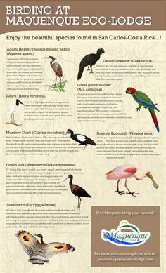 #Infographic Birding at Maquenque Eco Lodge .   #Birds #Birdwatching #tours