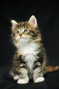 I want this cute kitten!!!