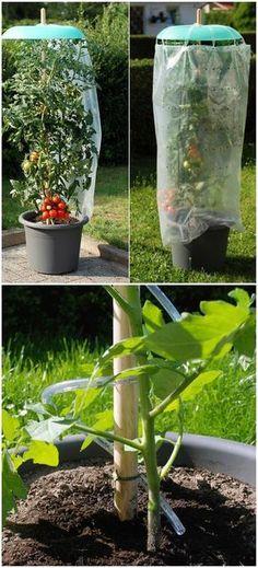 Eine tolle Idee seine Tomatenpflanzen vor Regen zu schützen! Das 9-teilige Tomatenhut Starter-Set - gefunden auf www.tom-garten.de.