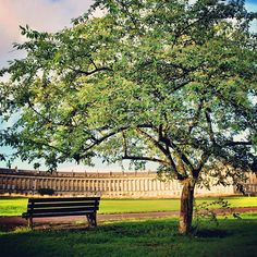 Have a seat in #Bath 🌳☀🛀 #uk #sunset #bench #tree #architecture #nikon #d600 #sunny #grass #travel