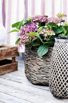 Outdoor decor = gray baskets and the purple hydrangea Hortensia Hydrangea, Hydrangea Plant, Purple Hydrangeas, Purple Flowers, Vibeke Design, Shabby, Wicker Baskets, Woven Baskets, Basket Planters