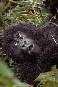 Ready for an ultra-private experience with gorillas? Gorilla Trekking, Adventure Trips, Mountain Gorilla, Best Hikes, Travel News, Walking In Nature, Africa Travel, Luxury Travel, Touring