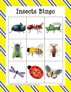 Insects Bingo - Gift of Curiosity Insect Activities, Eyfs Activities, Preschool Lesson Plans, Preschool Learning Activities, Kids Learning, Bingo, Insects Names, Bugs And Insects, Insect Crafts