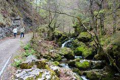 Brülisau Brüeltobel   Plattenbödeli.   Exewald (ai)  ☑ Switzerland, Sidewalk, Paradise, Fire, Hiking, Destinations, Stones, Nature, Viajes