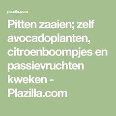 Pitten zaaien; zelf avocadoplanten, citroenboompjes en passievruchten kweken - Plazilla.com