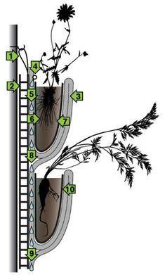 vertical living walls