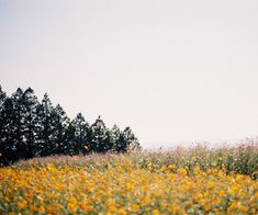 from the ground up // flowers // field // aesthetic // photography // nature // art