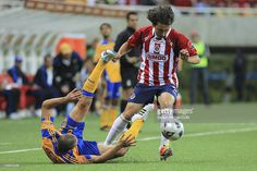 Chivas vs Tigres. Striker Omar Arellano (R) of Chivas struggles for the ball with Jorge Torres Nilo of Tigres (L) during a match as part of the Clausura 2011 at Omnilife Stadium on March 5, 2011 in Guadalajara, Mexico.