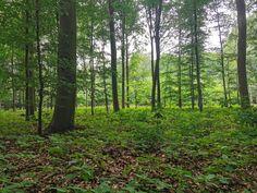 Rund um den Waldsee Bülten Wer kennt Ihnen nicht, den wunderbaren Waldsee in unserem schönen Örtchen? Ob Spaziergänger, Jogger, Gassigeher oder Fahrradfreunde, viele davon sind hier täglich unterwegs Andere sind hier auf dem Weg zur Arbeit in die nahegelegenen Orte Handorf und Rosenthal unterwegs. Der Waldsee ist einfach ein Ort, an dem man sich gerne […] The post Rund um den Waldsee Bülten first appeared on Bülten. Jogger, Post, Directional Signs, Memorial Stones, Woodland Forest, Simple