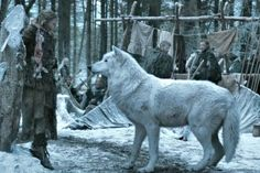 Image result for how big are wolves
