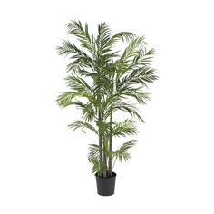 Areca Silk Palm Tree - 5 Feet Tall *** Check this awesome product by going to the link at the image.
