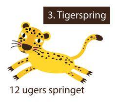 tigerspring 3. 12 ugers springet