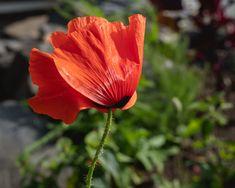 21st, Park, Plants, Photography, Photograph, Fotografie, Parks, Photoshoot, Plant