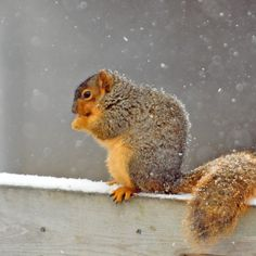 Animals have some amazing adaptations and strategies for surviving even the coldest days of winter. Learn how they manage in this post from K12's science expert. #SavortheSeason
