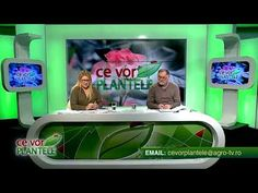 ce vor plantele cristina ghibu 2019 11 18 partea2 0657 - YouTube Flat Screen, 18th, Youtube, Flat Screen Display, Youtube Movies