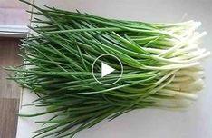 Így lehet télen is temérdek mennyiségű újhagymád ültetés nélkül! Green Onions Growing, Growing Greens, Organic Gardening, Gardening Tips, Kitchen Gardening, Flower Gardening, Dream Garden, Home And Garden, My Secret Garden